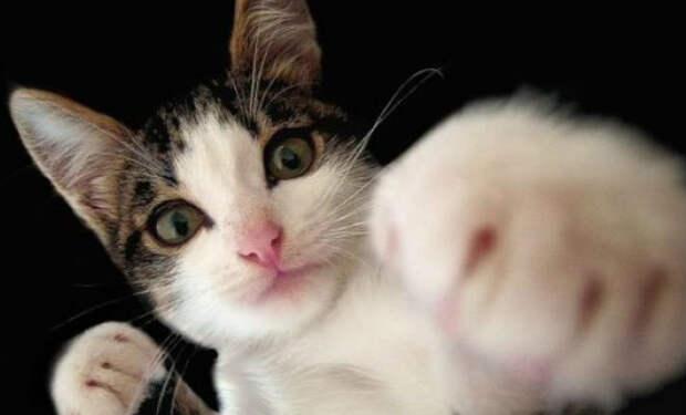Кот выучил пару приемов ММА и отомстил навязчивой хозяйке