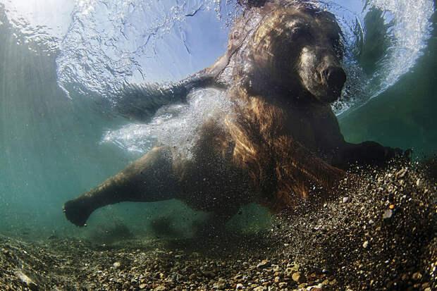 Лучшие фотографии природы фотоконкурса Siena International Photography Awards 2016 2
