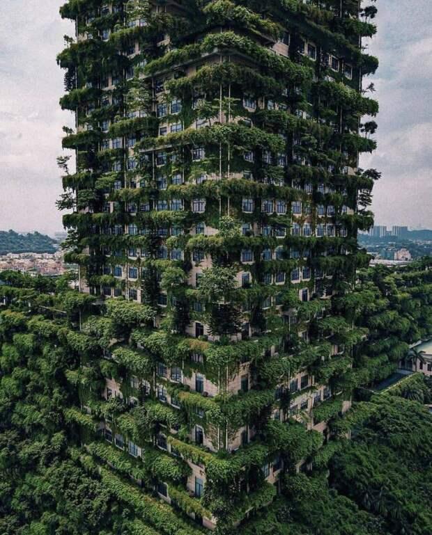 Зеленая многоэтажка