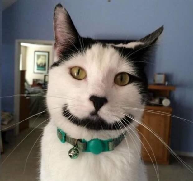 Кошки с причудливым окрасом шерсти коты, кошки, прикольный окрас кошек.