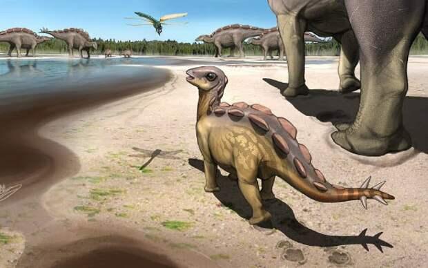 В Китае нашли самый маленький след стегозавра. Малыш был размером с кошку