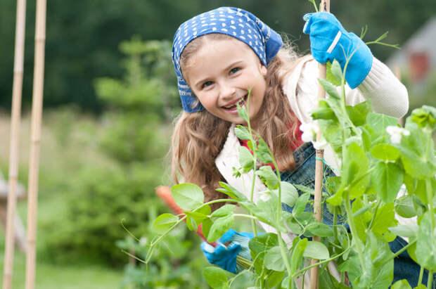 6 удивительных огородных секрета