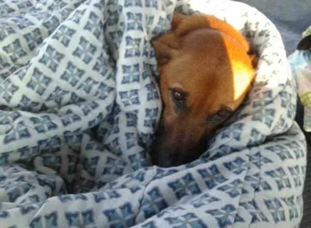 В холодную погоду работники автовокзала не только дали ночлег бездомным собакам, а и организовали им кровати