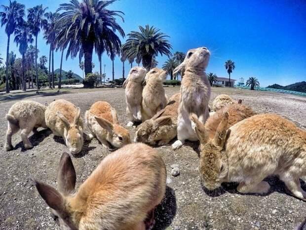 В японской префектуре Хиросима есть остров, населённый кроликами вопросы, животные, земля, мир, планета, почему, факты