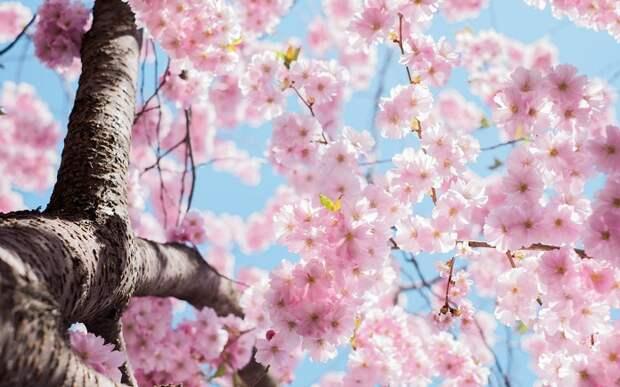 Какая весна у вас в душе?