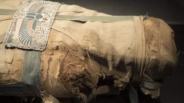 Проклятие фараонов: археологи против, чтобы власти Египта перемещали гробницу в музей