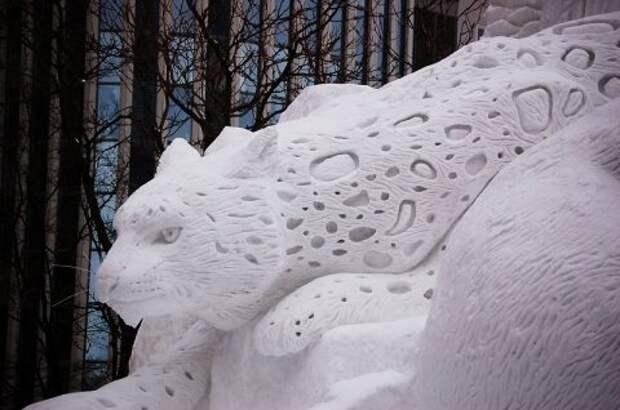 Хищная кошка из снега