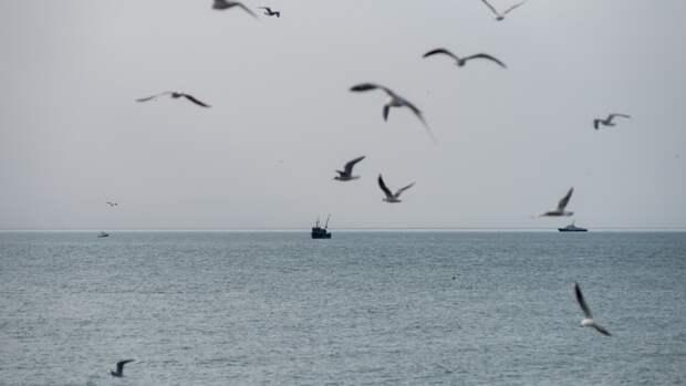 Численность птиц в шесть раз превысила количество живущих на Земле людей