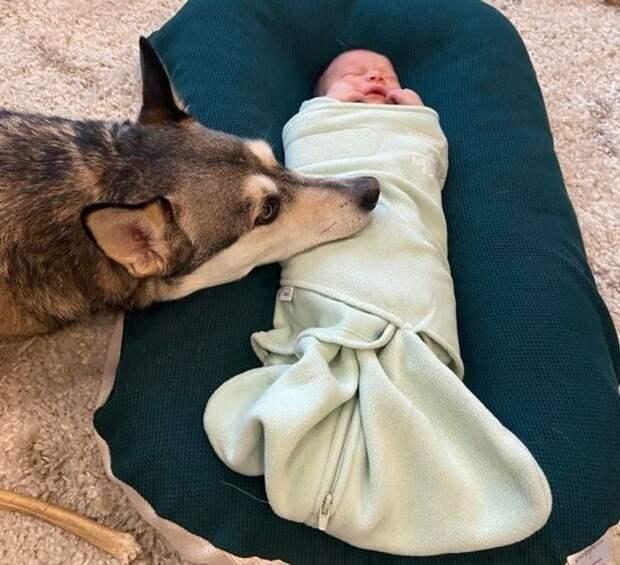 20 невероятных милых доказательств, что в жизни каждого малыша должно быть домашнее животное