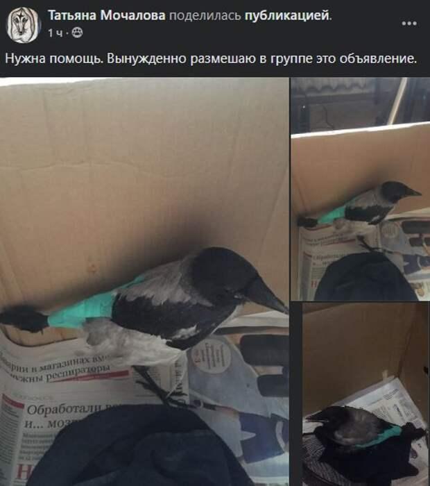 В районе начался благотворительный сбор на лечение раненого вороненка на Ленинградке