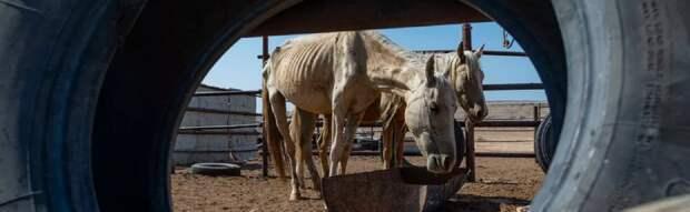 Массового падежа скота зимой боятся фермеры Мангистау