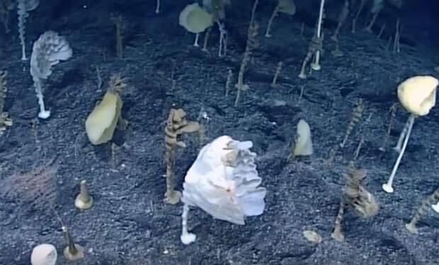 Дайверы увидели лес словно с другой планеты: растения находятся под водой