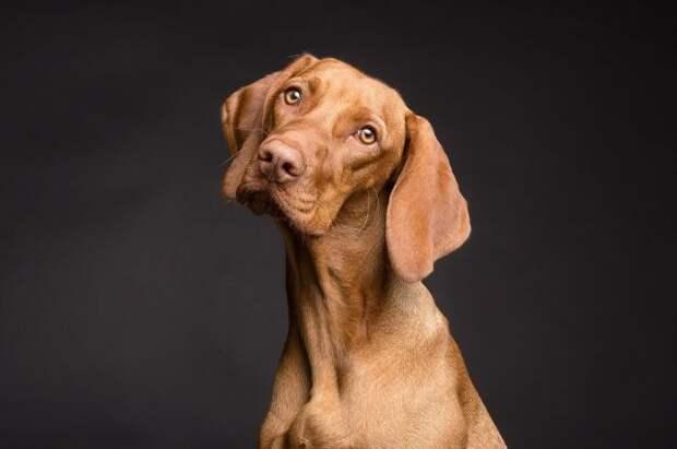 Власти США ввели запрет на ввоз собак из РФ