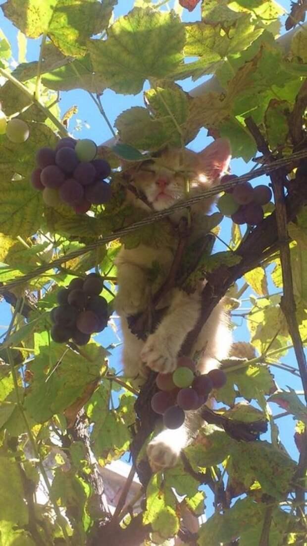 Этих 12 котов не надо спасать с дерева, им и так хорошо