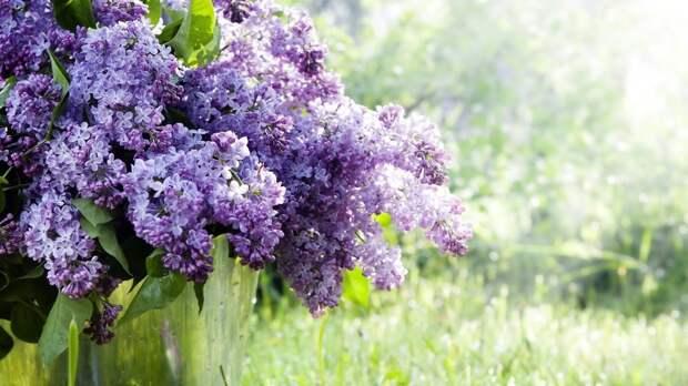День Преподобного Феодосия Печерского: какой церковный праздник 16 мая и какие в этот день приметы?