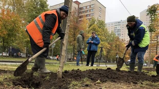 Более 100 деревьев высадили  у «Сестрорецкого рубежа» в ходе акции «Сад памяти»