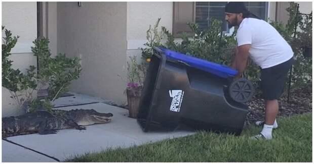 Мужчина поймал аллигатора спомощью мусорного контейнера