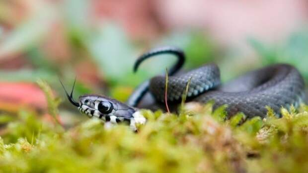 Змеиный праздник: что можно ичто нельзя делать 12июня