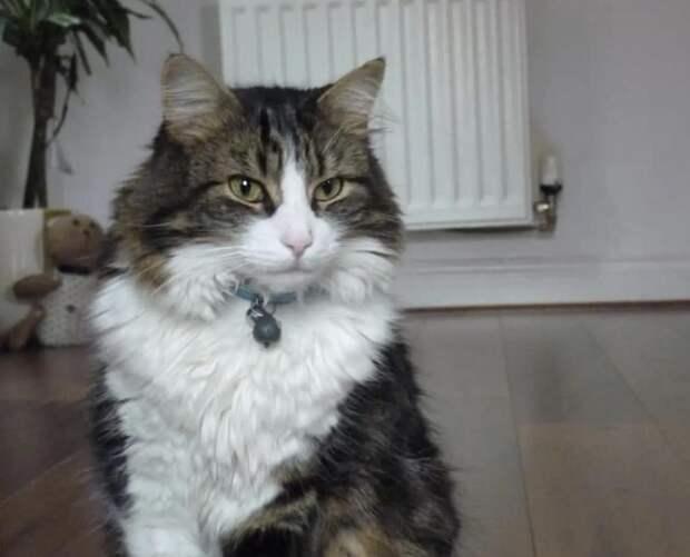 Семья похоронила кота, а он вернулся через 3 недели