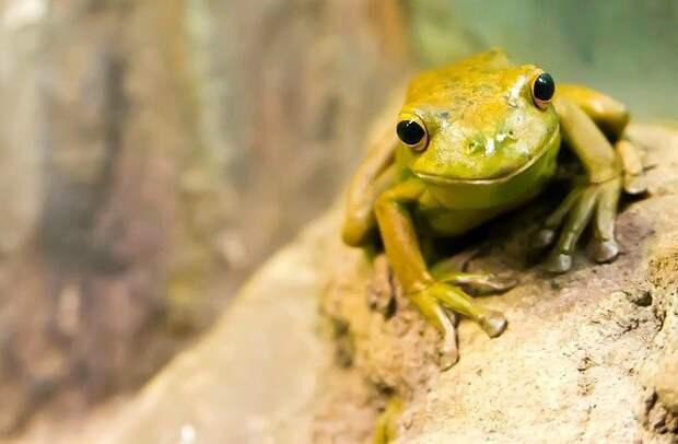 В природном парке «Тушинский» проснулись лягушки