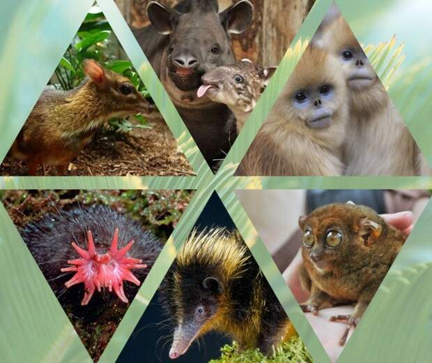 10самых необычных животных совсего мира