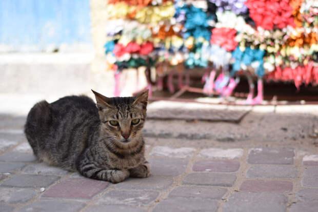 Что? Эс-Сувейра, город, животные, кот, марокко, проект, фотограф