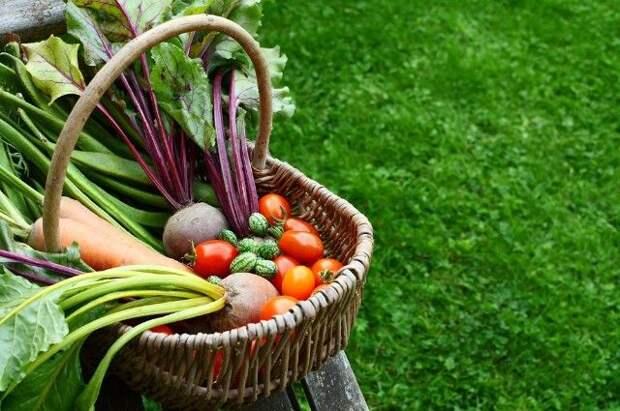 Приятная пора. Какими делами заняться в саду и огороде в июле