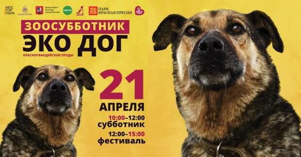 Это интересно! 21 апреля в Москве состоится Зоосубботник и фестиваль собак «Эко дог»