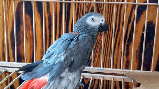 – Тёща – это хорошо! – сразу похвастался знаниями попугай, – Тёща добрая!