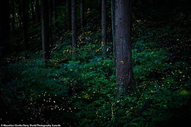 Руки-базуки и другие снимки из шортлиста конкурса Sony World Photography Award 2020
