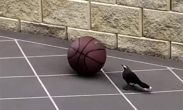 Птица решила поиграть в баскетбол и стала гонять мяч