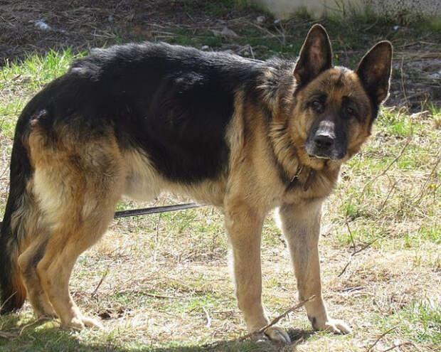 Спустя семь лет разлуки они нашли своего пса! в екатеринбурге хозяева нашли своего пса по клейму