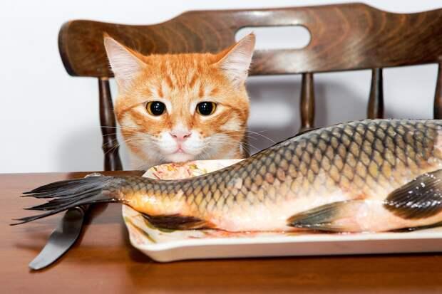 Трапеза кота Шарика