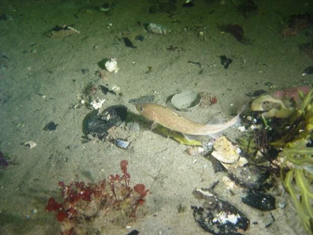 Биологи выяснили, что загрязнение вод нефтепродуктами опасно для сердца рыб