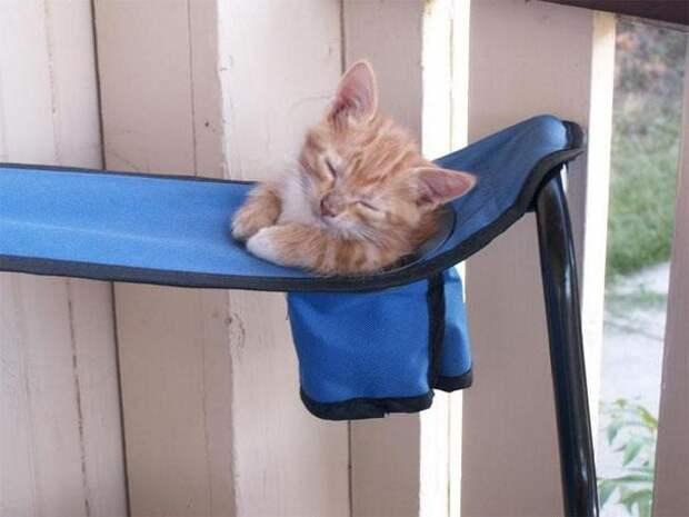 Кошка заснёт где угодно даже без удобной лежанки – и вот вам 25 аргументов в пользу этого