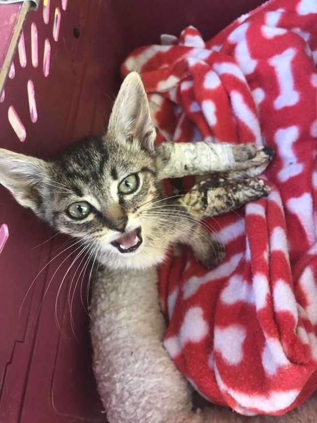 Котенок полз по тротуару, волоча за собой лапки в гипсах  история, история спасения, котенок, котята, помощь животным, спасение животных