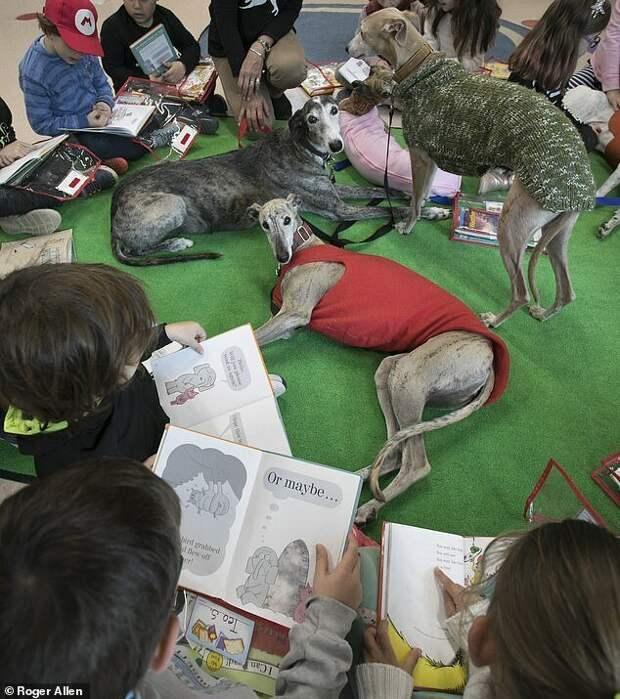 Не в ответе за тех, кого приручили: почему испанские охотники массово бросают борзых погибать история, собаки, спасение