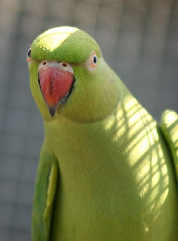 Зеленая птица