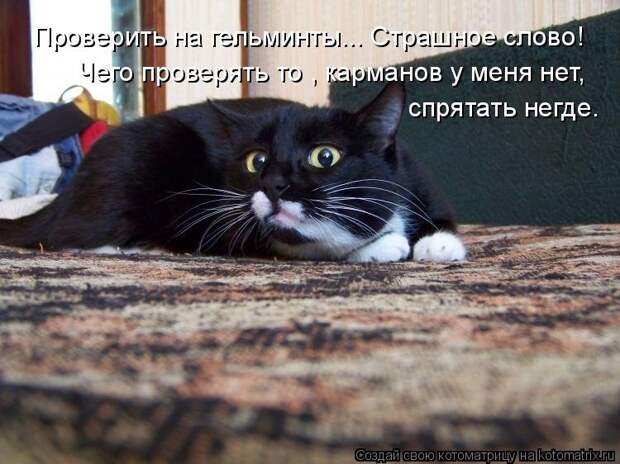 1451737575_kotomatricy-13