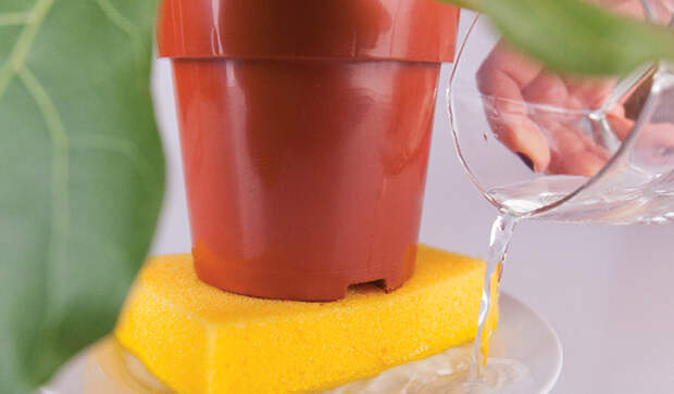 Как использовать кухонную губку для полива комнатных растений.