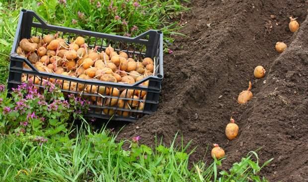 Роспотребнадзор: что известно о «штрафе за картошку»