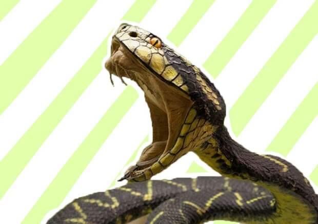 Что делать, если укусила змея: первая помощь