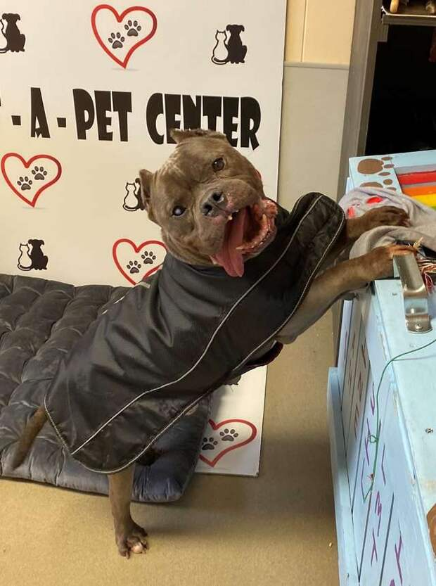 Старенький пёс 10 лет жил на улице. Теперь он в приюте, но, кажется, потерял надежду на лучшее