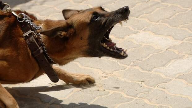 СК начал проверку по факту нападения собаки на 5-летнего ребенка в Бердске