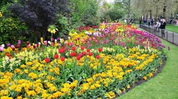 массив, клумба, цветы, сад