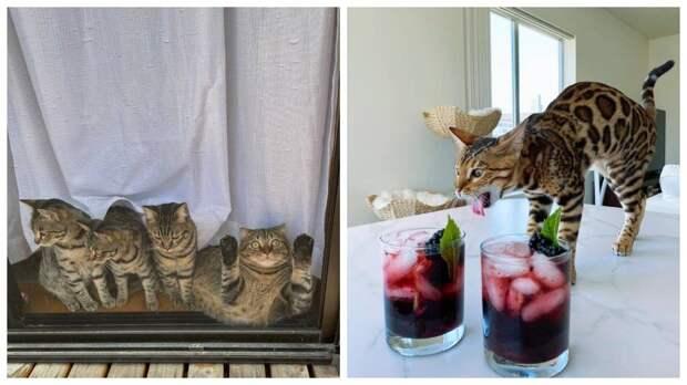 13 котов, у которых все эмоции на морде написаны