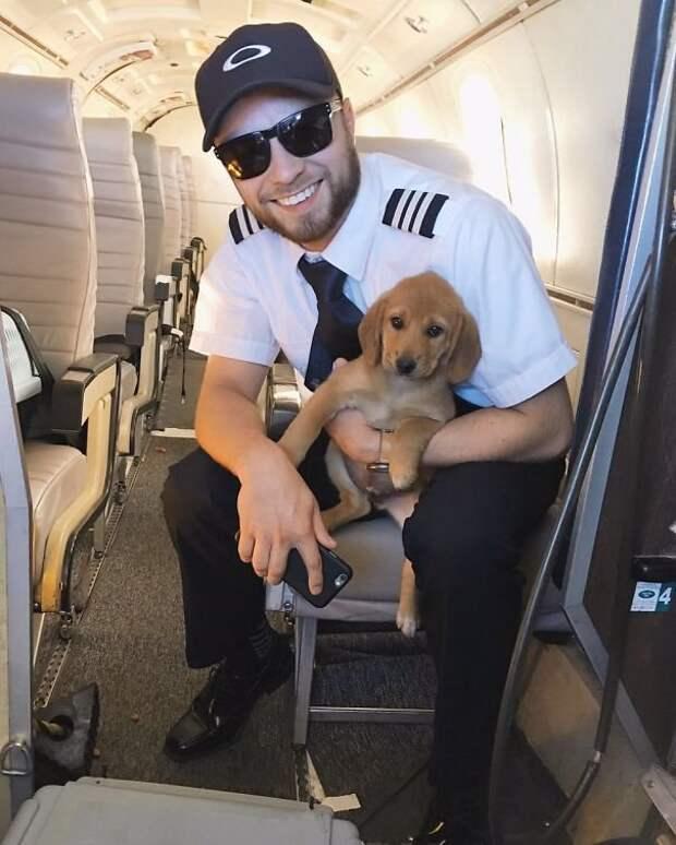 21. Милый пассажир борт, животные, пассажир, перелет, полет, самолет, фото
