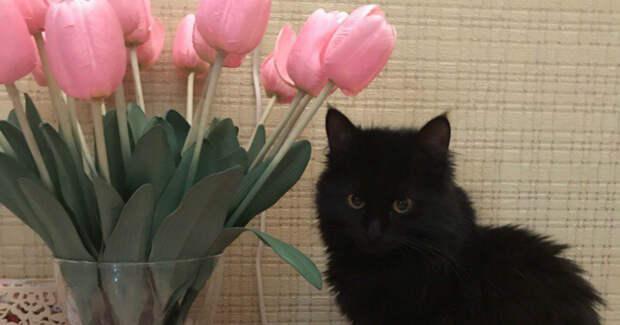 Катя горевала по умершей кошке… Но как-то раз она увидела ЕЁ в подземном переходе!