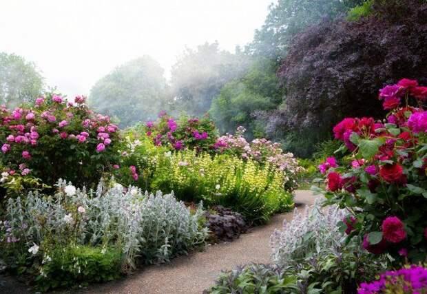 куртины. клумба, цветы, сад