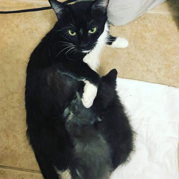 Кошка и два её котёнка пережили серьёзные испытания, но выдержали всё и сберегли друг друга
